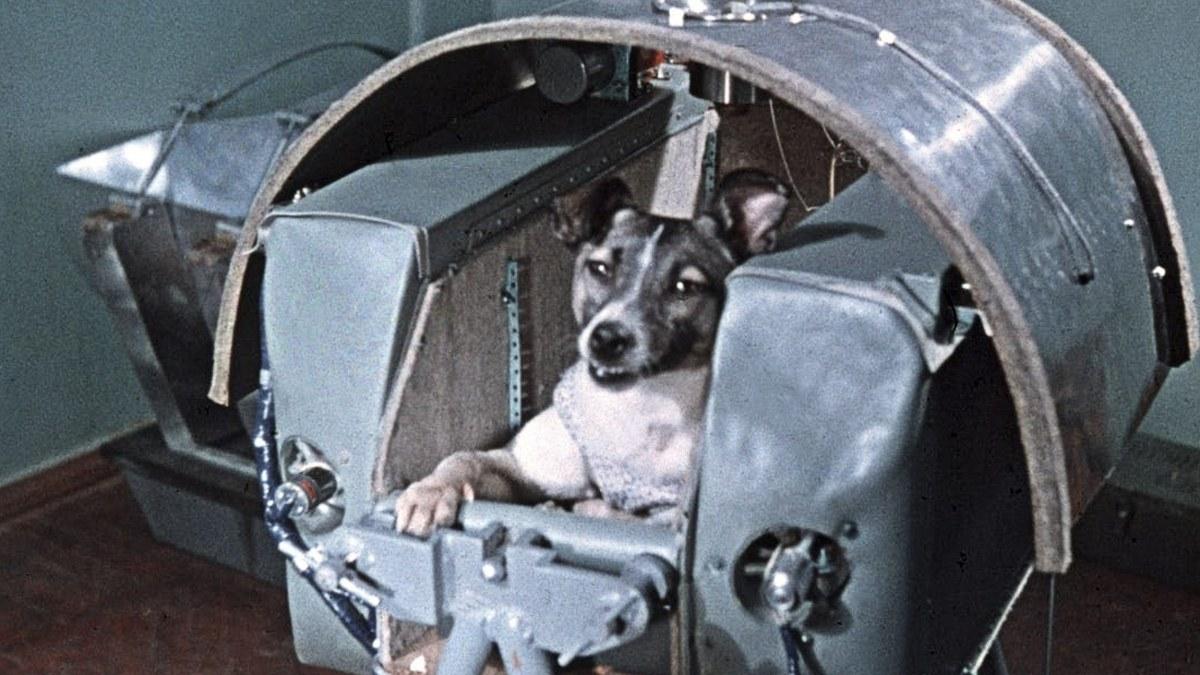 Los perros llegaron al espacio antes que los humanos