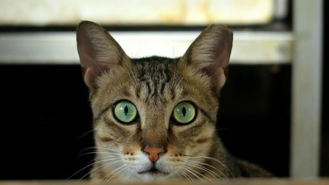 Gato usar arenero