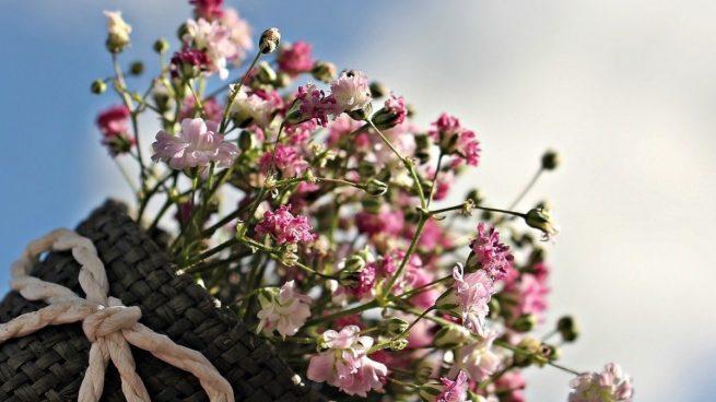 Trucos y consejos para regar las plantas en primavera