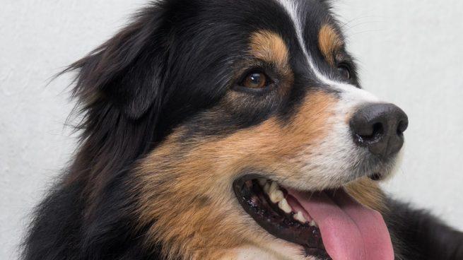 3 cosas que nunca debes hacer con tu perro: ¡toma nota!