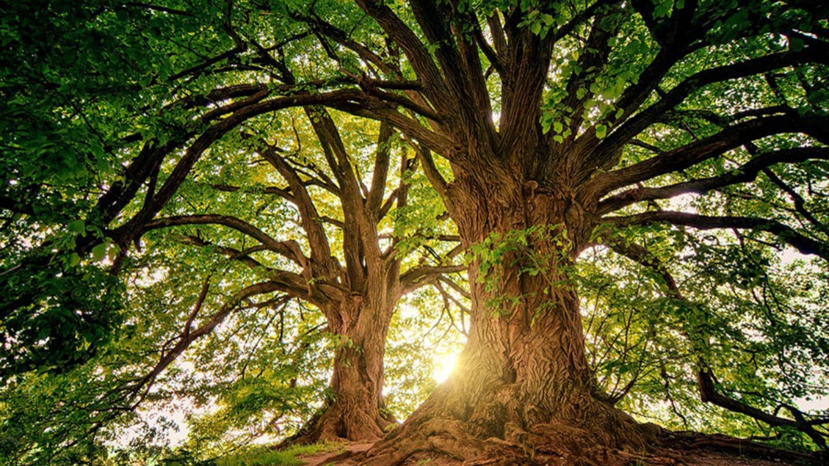 Vivió en un árbol para no contagiar de coronavirus