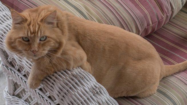 Gato araña sofá