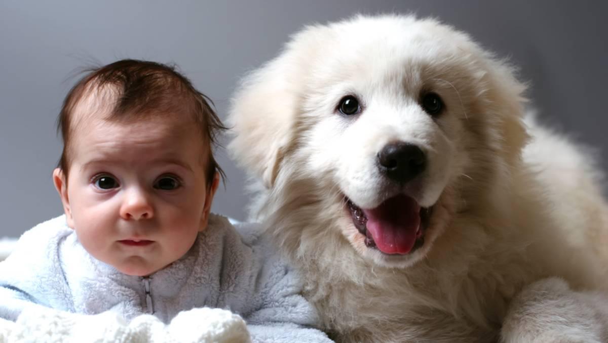 Perro juguetes del bebé