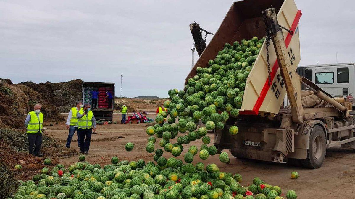 Productores agrícolas de Almería tiran más de 150 toneladas de melón y sandía en protesta por los bajos precios (Coexphal).
