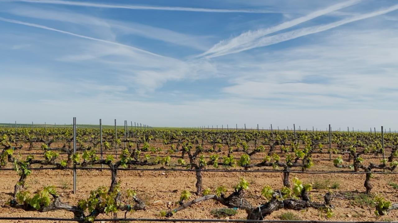 La innovación en el sector vitivinícola