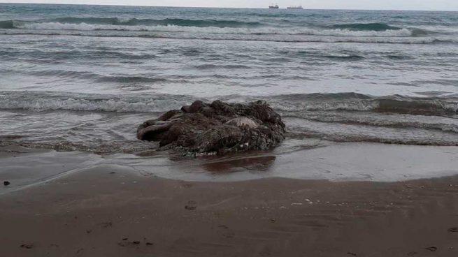 calamar-gigante-gurugu-castellon