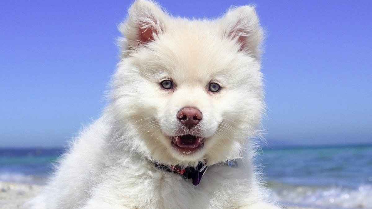 Cómo actuar si a tu perro le da un golpe de calor en verano