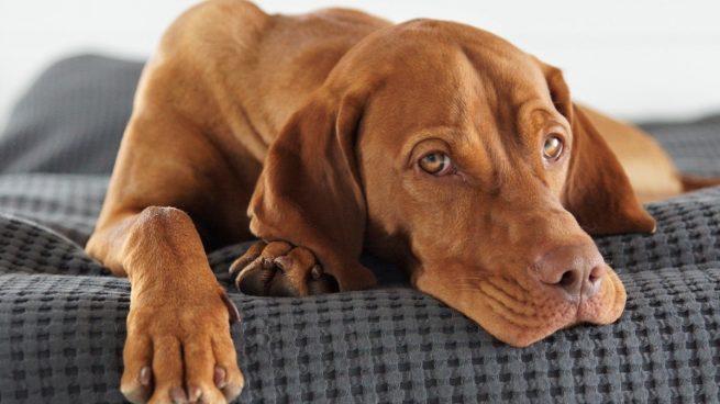 Esto es lo que cuesta mantener a un perro al año según un estudio