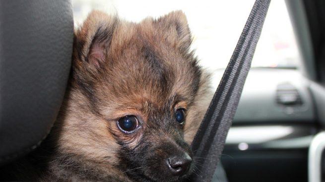 Viajar perro coche