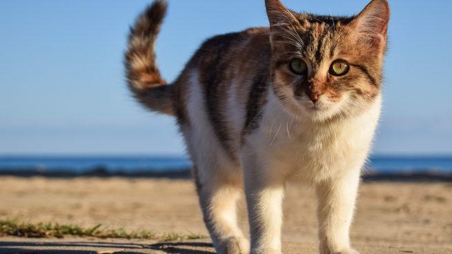 Las enfermedades más frecuentes en los gatos