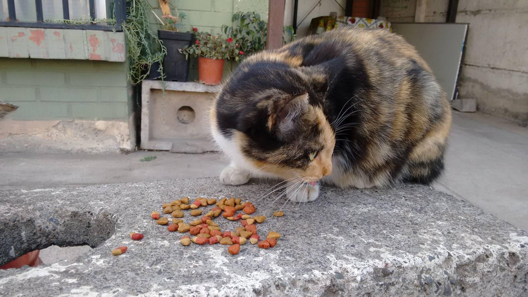 Alimentos para gato