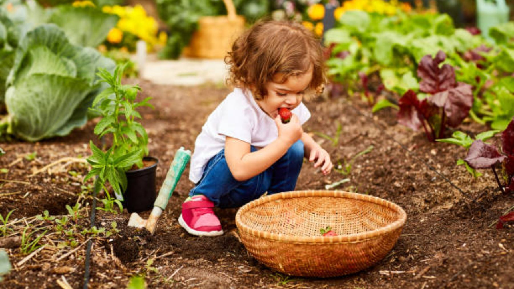 De qué modo los alimentos orgánicos ayudan en el desarrollo cognitivo de los niños