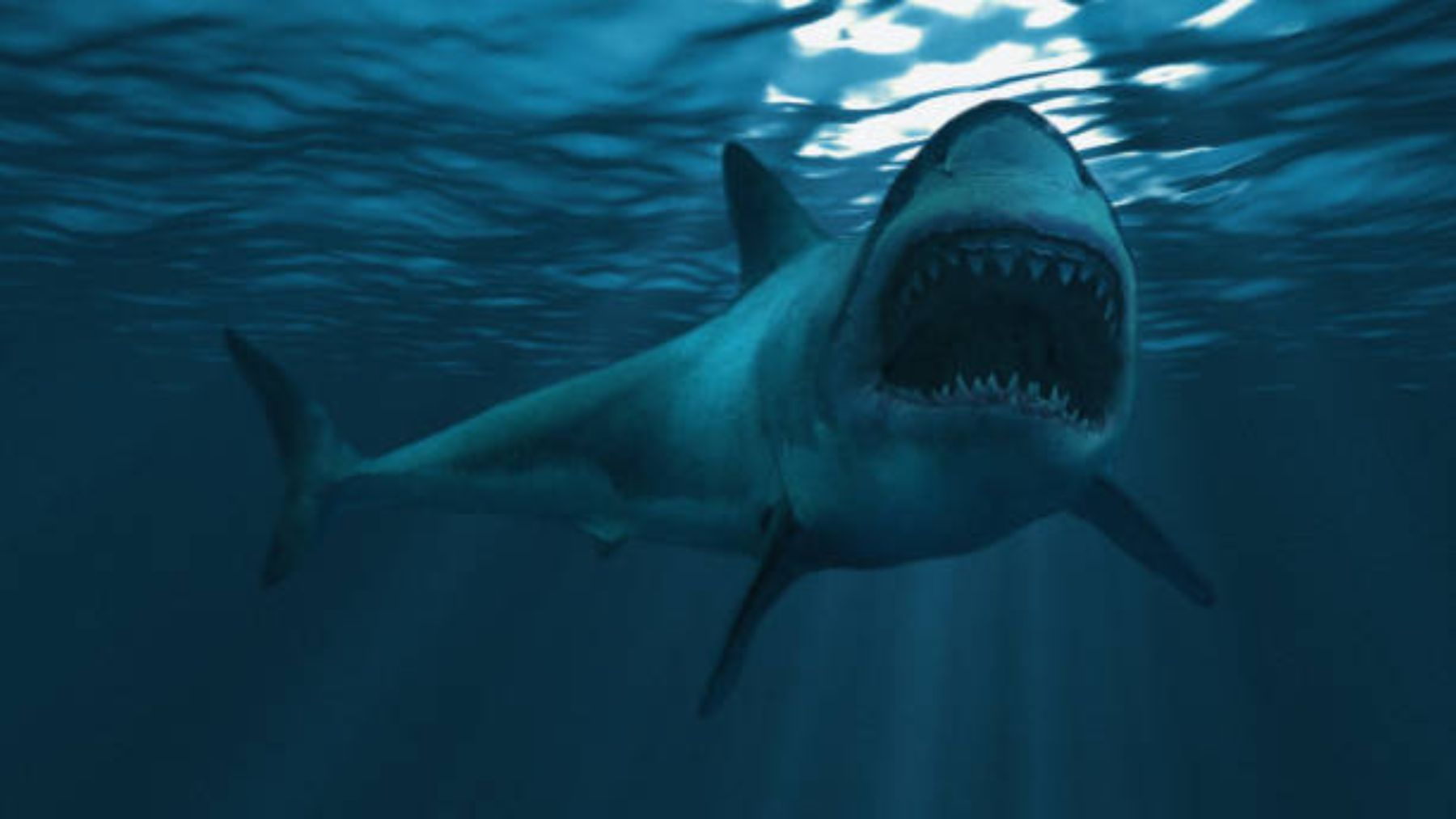 Descubierta la organización de las distintas especies de tiburones para cazar