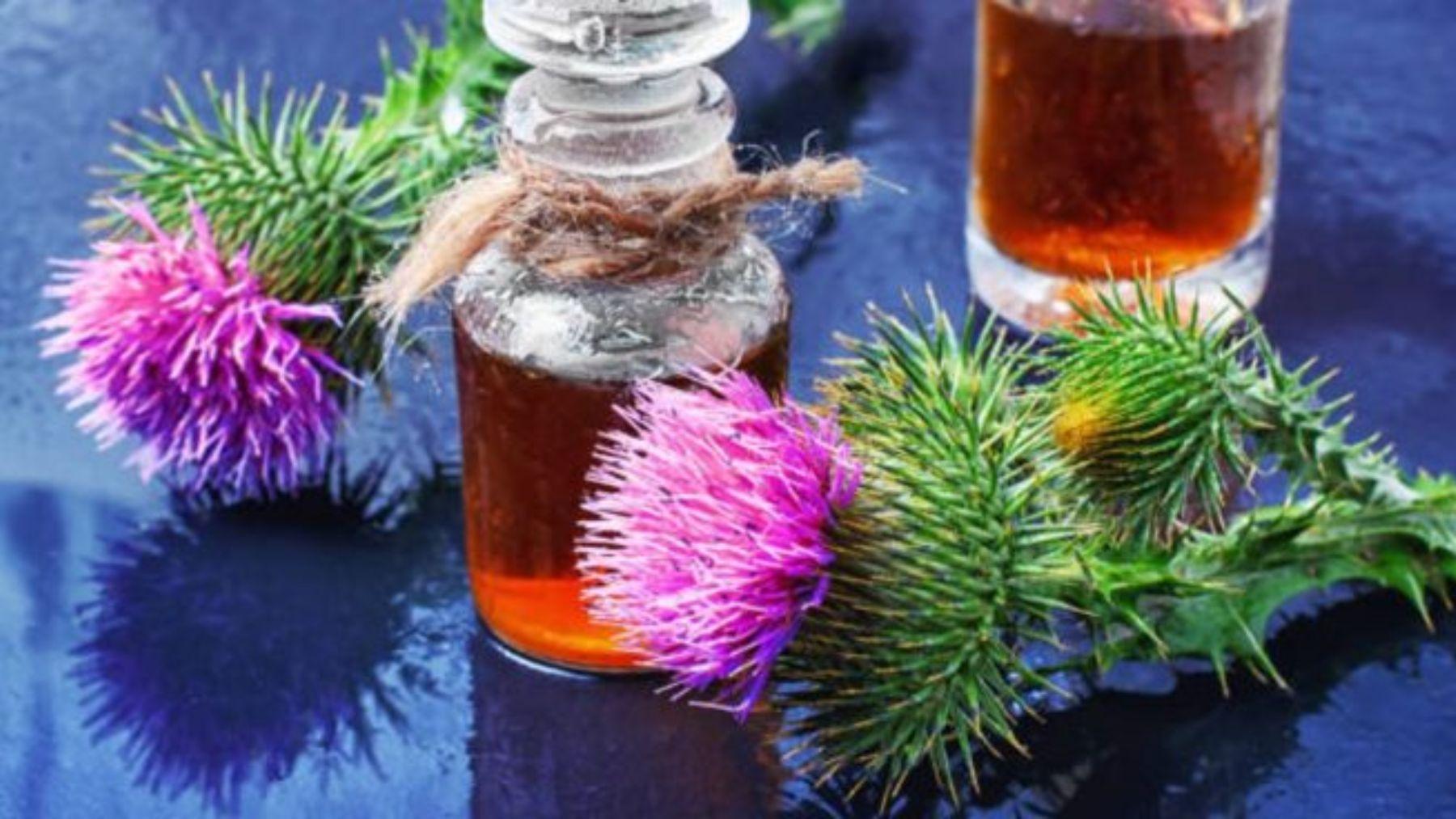 Descubre qué plantas te van ayudar a cuidar bien de la piel