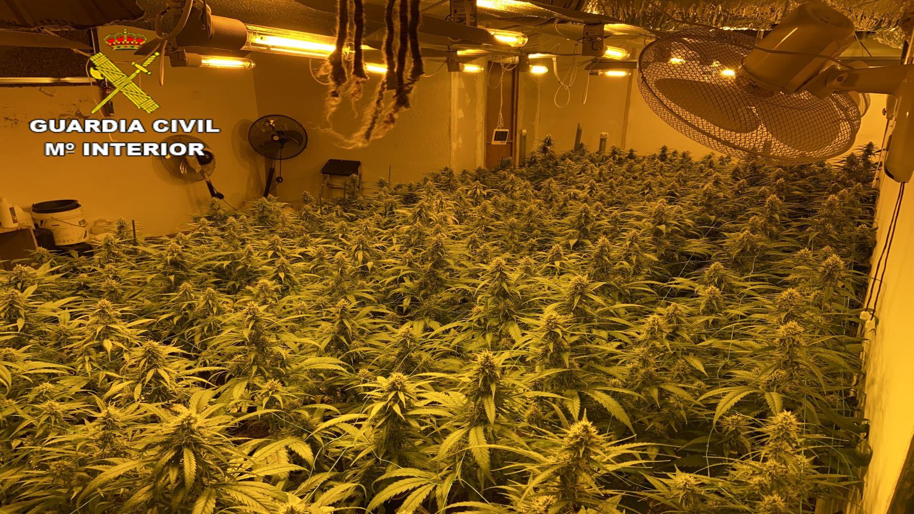 Cultivo ilegal de marihuana (GUARDIA CIVIL).