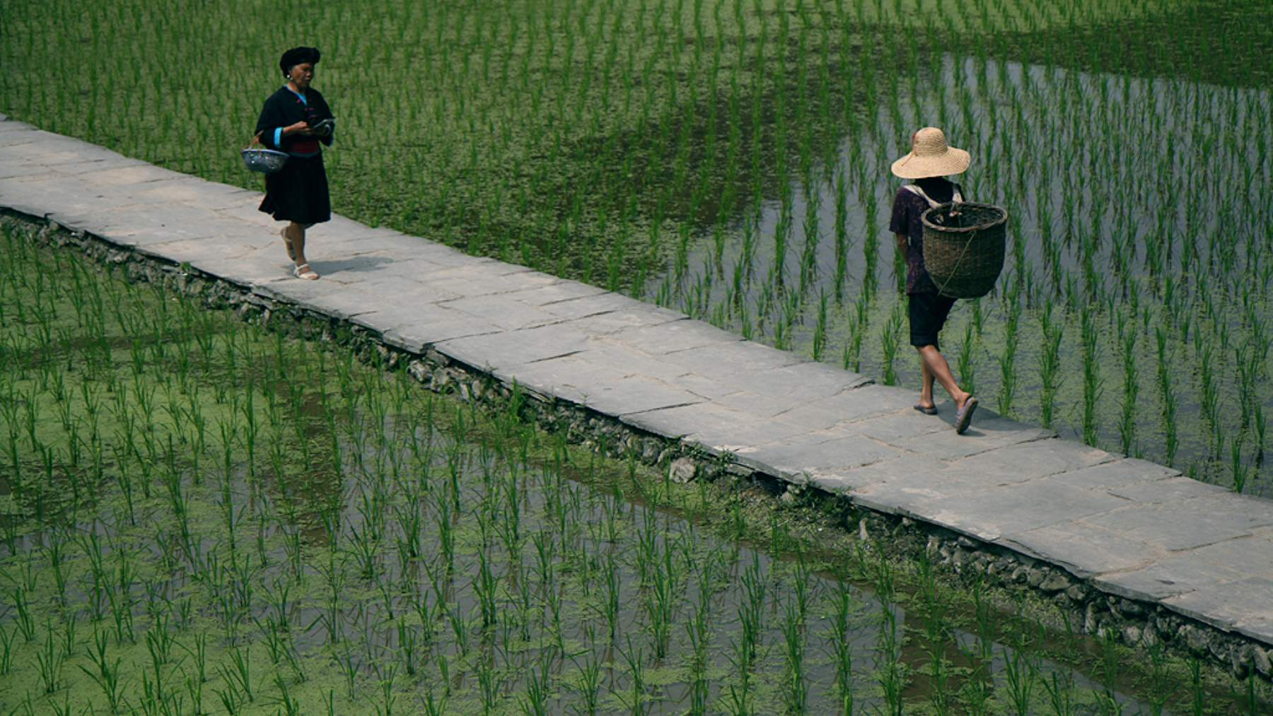 China  arroz espacial