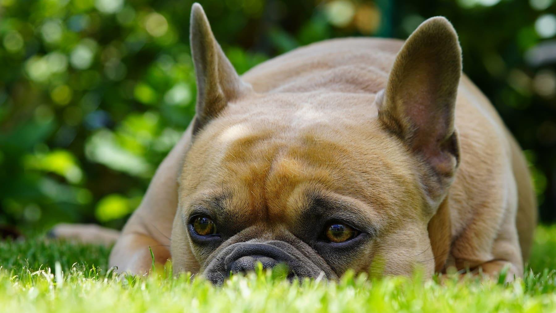 Bacterias en comida para perros