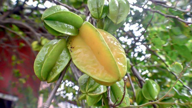 Fruta carambola