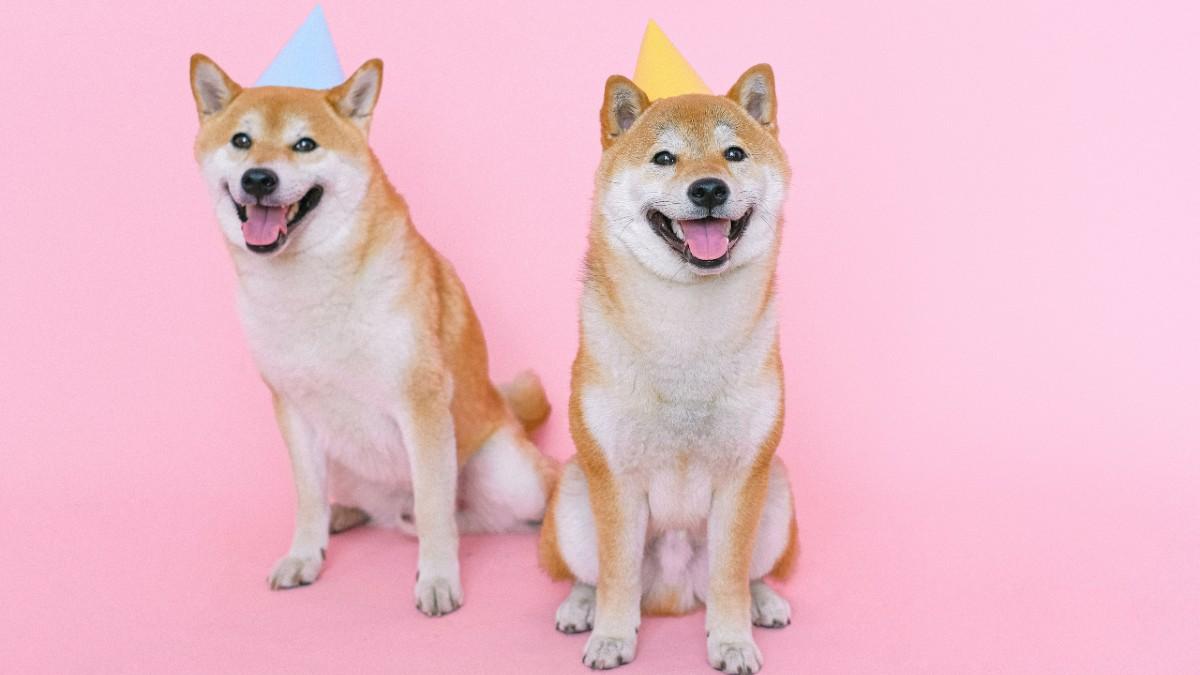 Día Mundial del Perro 2021