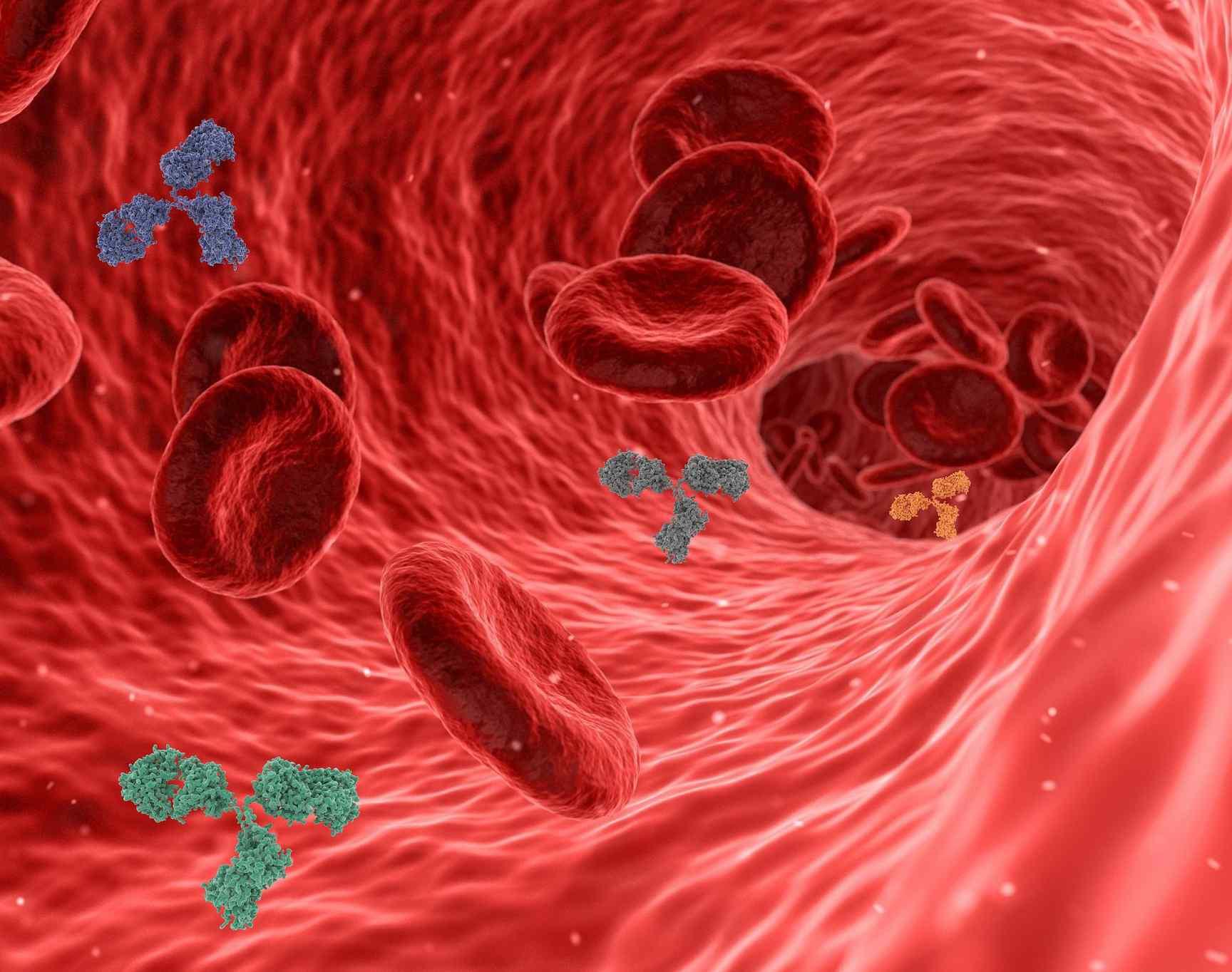 ¿Cuánto dura la respuesta inmune de los contagiados por Covid?