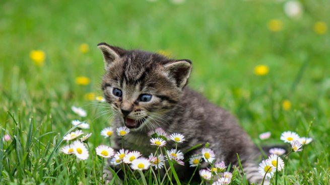 Plantas tóxicas gatos