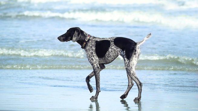 Destinos España viajar perro
