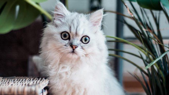 Covid-19 perros y gatos