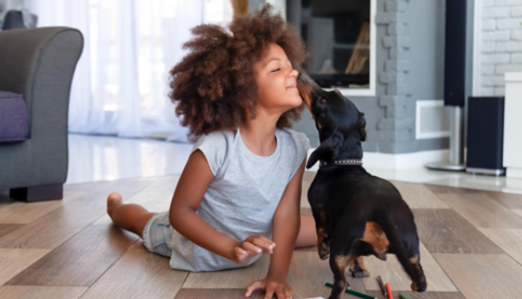 Cómo hacer una alfombra olfativa o sensorial para perros
