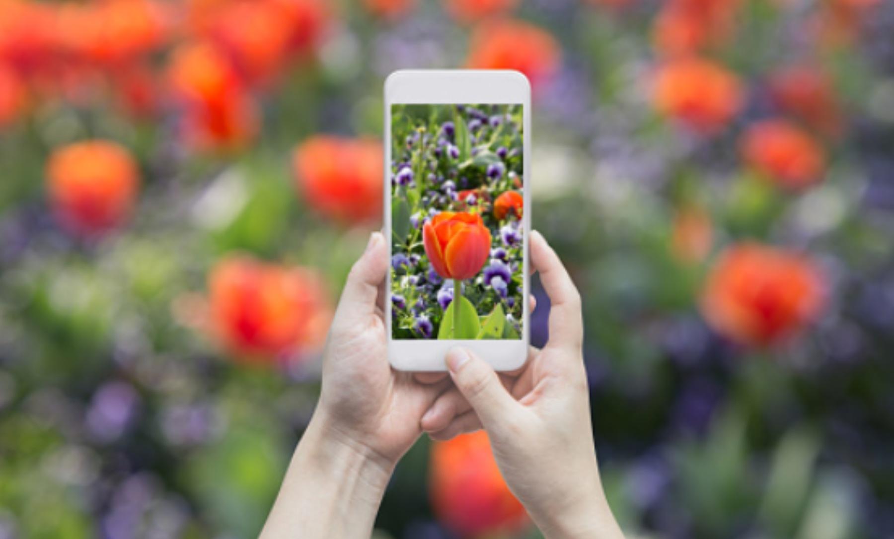 Estas son las mejores App para cuidar de tus plantas