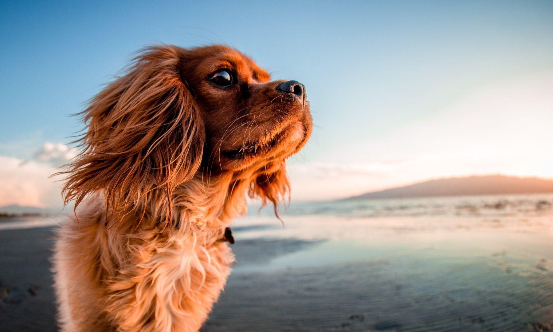 Pasos para evitar que nuestro perro se queme las patas en verano