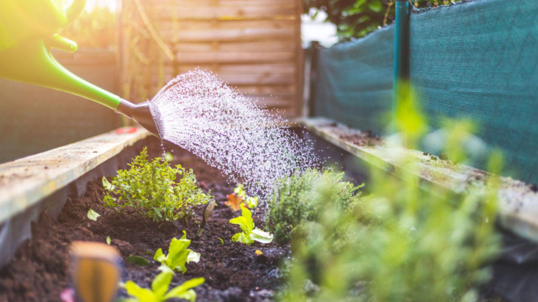 Los consejos esenciales para cuidar tus plantas en la ola de calor