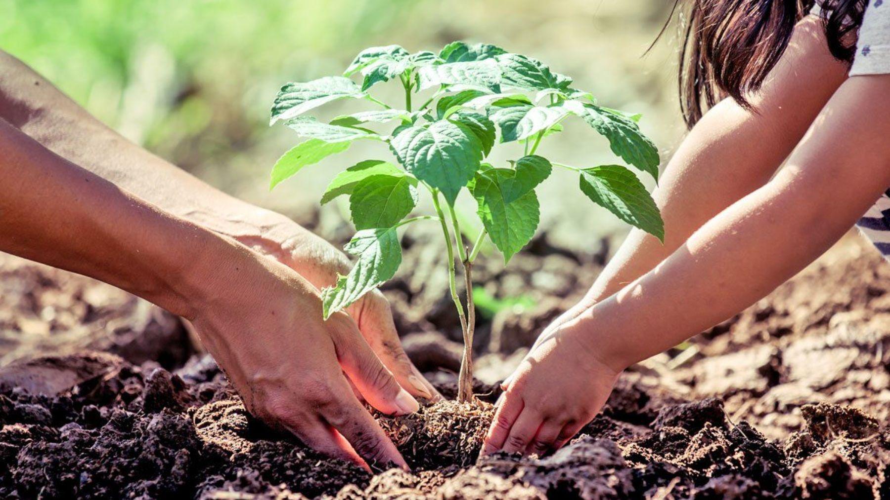 Descubre qué sucedería si se plantaran árboles durante dos décadas por parte de todos y cada uno de nosotros