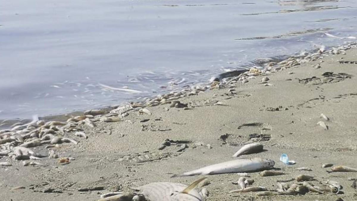 Desastre ecológico en el Mar Menor.