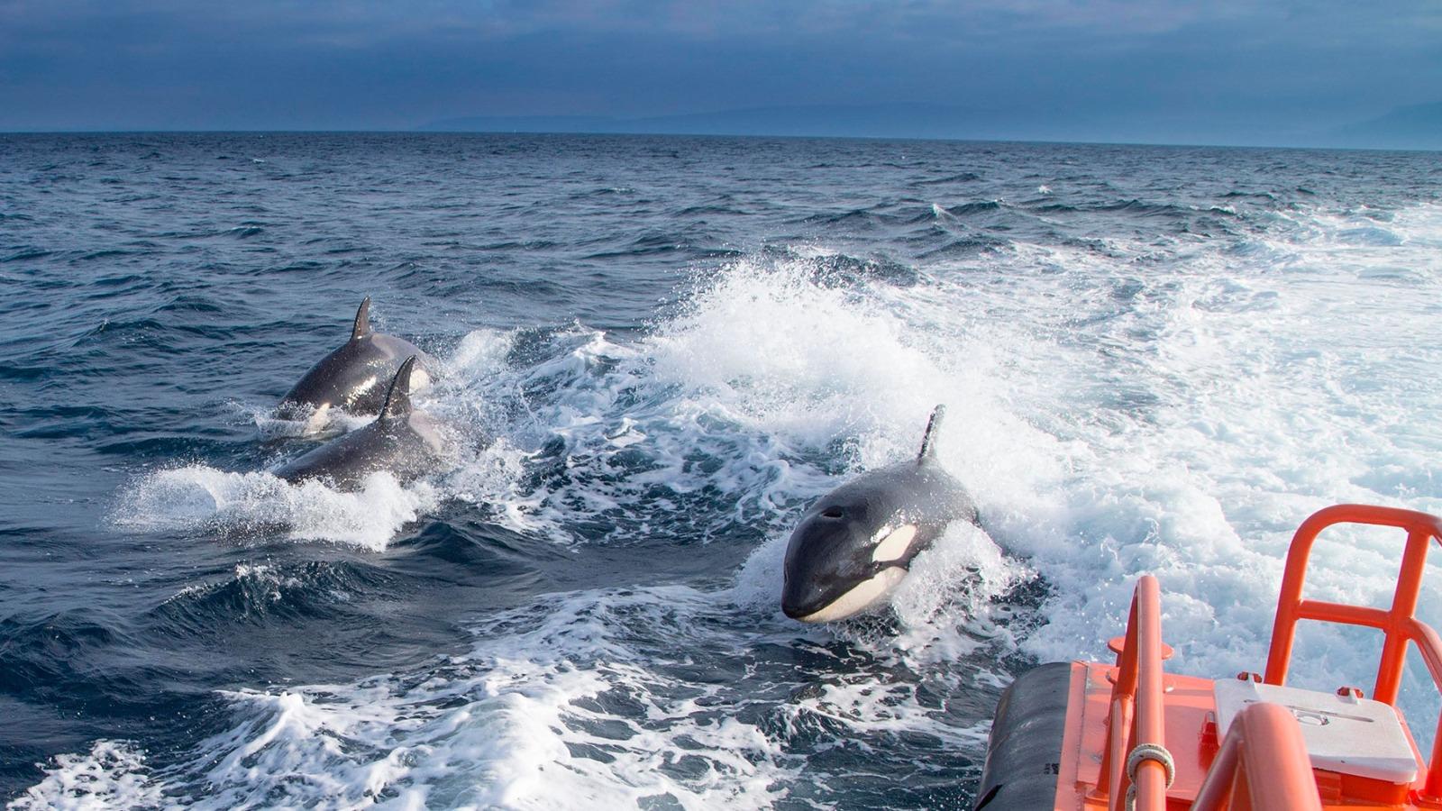 Orcas – MITMA