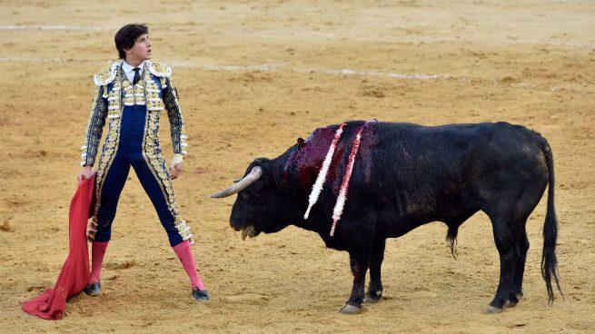 Palencia Toros