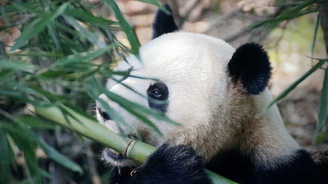 Animales China