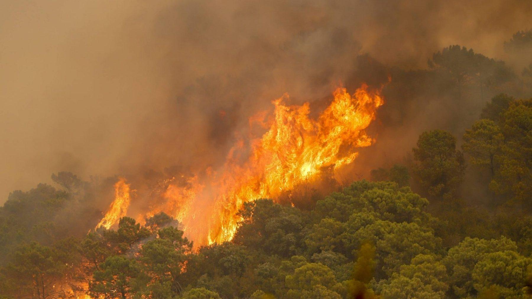 Incendio de Sierra Bermeja (Málaga).