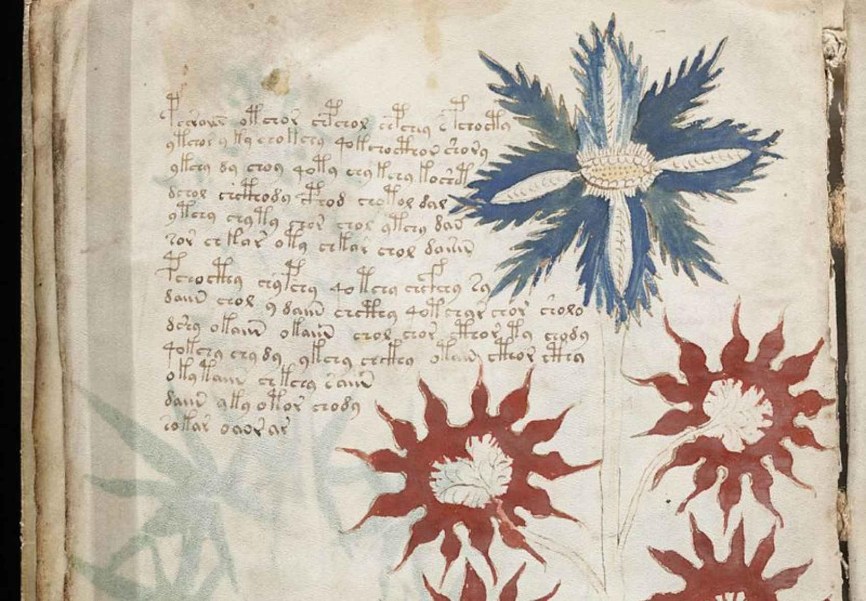 Los misterios del Manuscrito Voynich, el libro que nadie puede leer