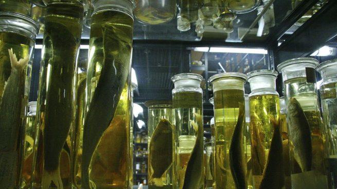 alcohol conservar cosas