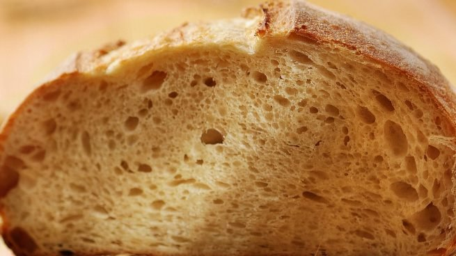 Perros pueden comer pan
