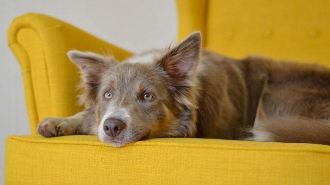 Invento Amazon quitar pelos perro sofá