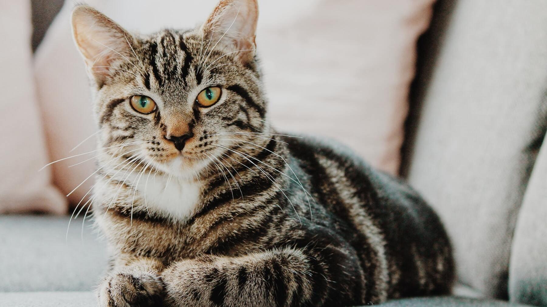 Gato aparece a 180 kilómetros de distancia