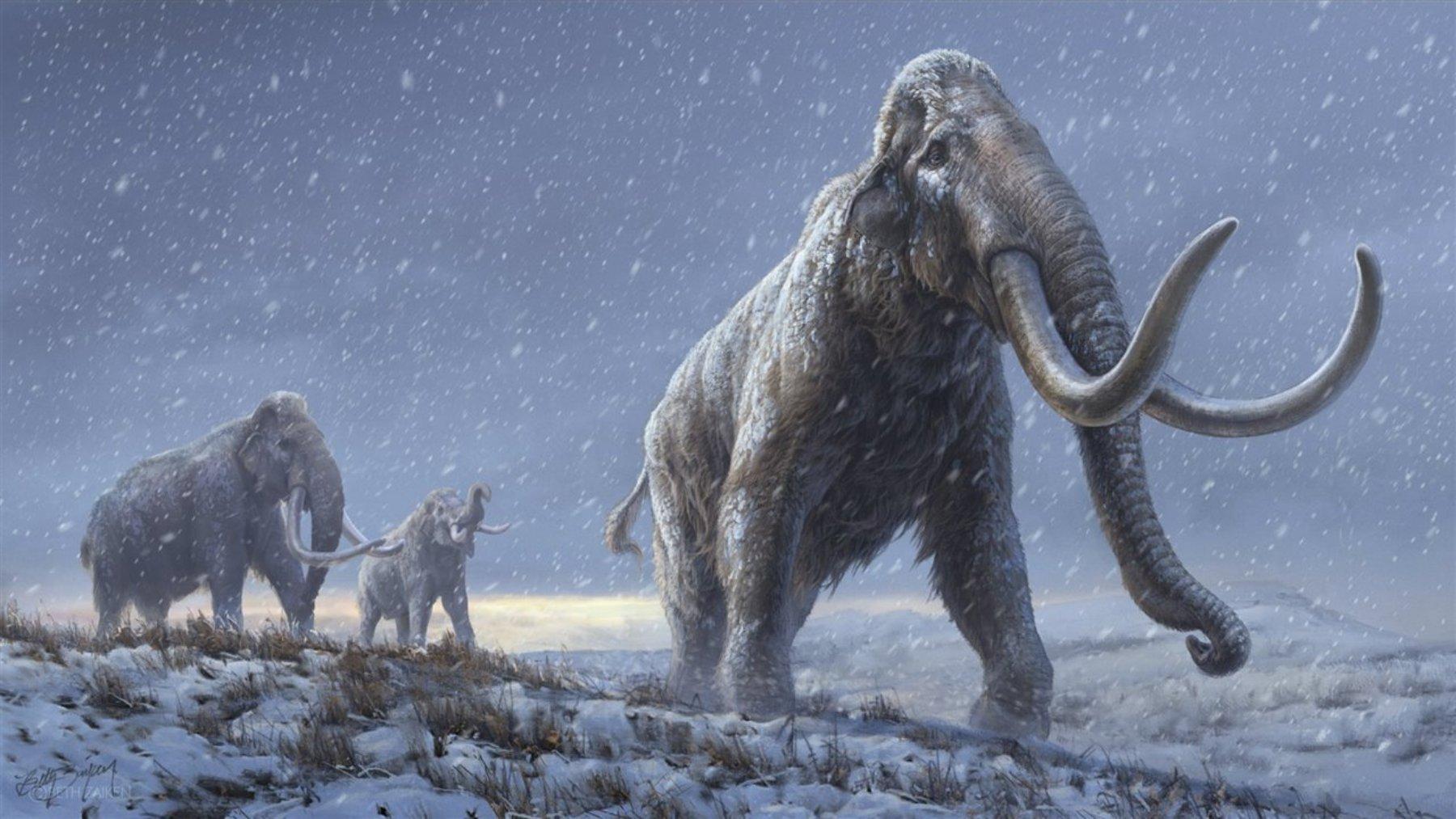 ¿Resucitará la ciencia al mamut?
