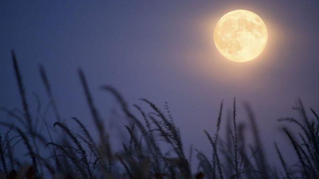 luna llena de cosecha