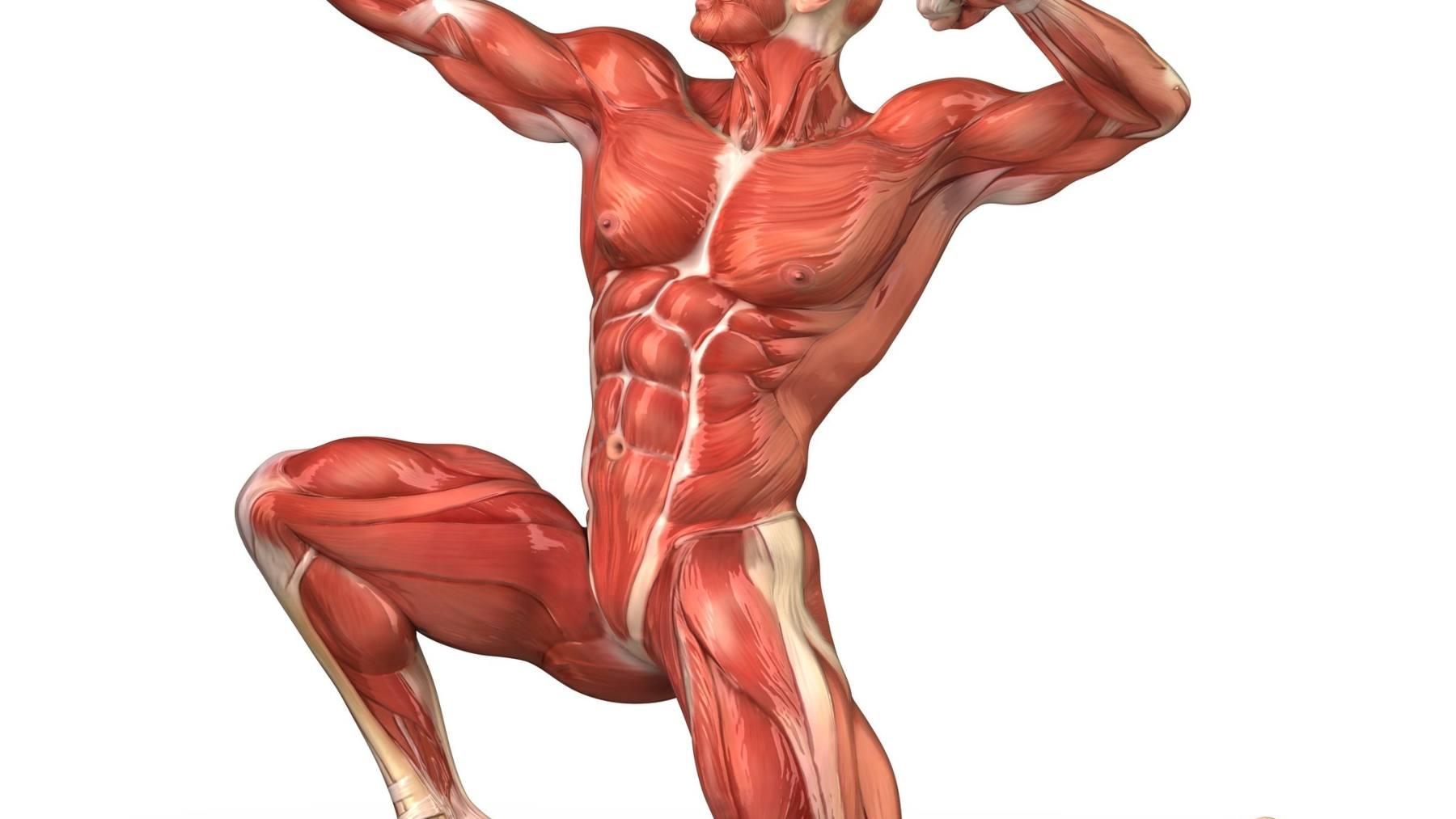 Músculos sintéticos