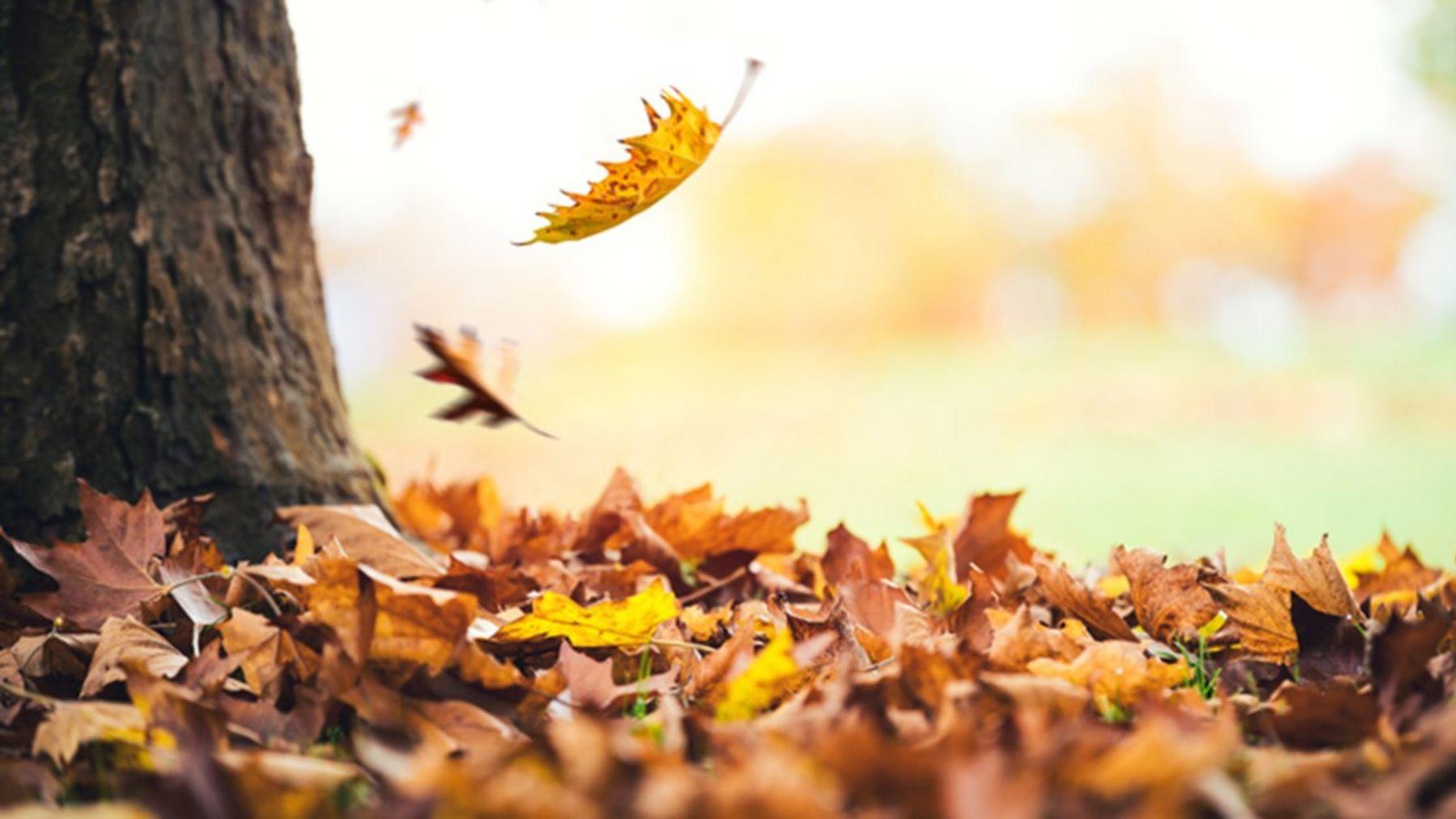Descubre algunas de las curiosidades más sorprendentes sobre el equinoccio de otoño