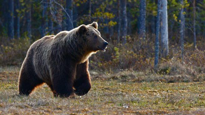 Mujer rodeada osos