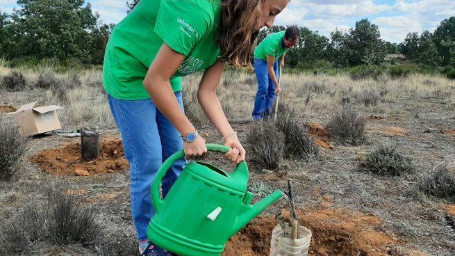 Iberdrola involucra a 5.000 voluntarios en el Día Internacional del Voluntariado