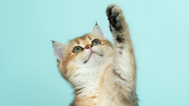 Evitar gato suba encimera cocina