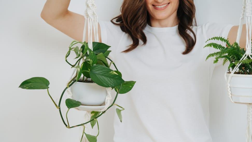 Descubre las mejores plantas colgantes para tu hogar